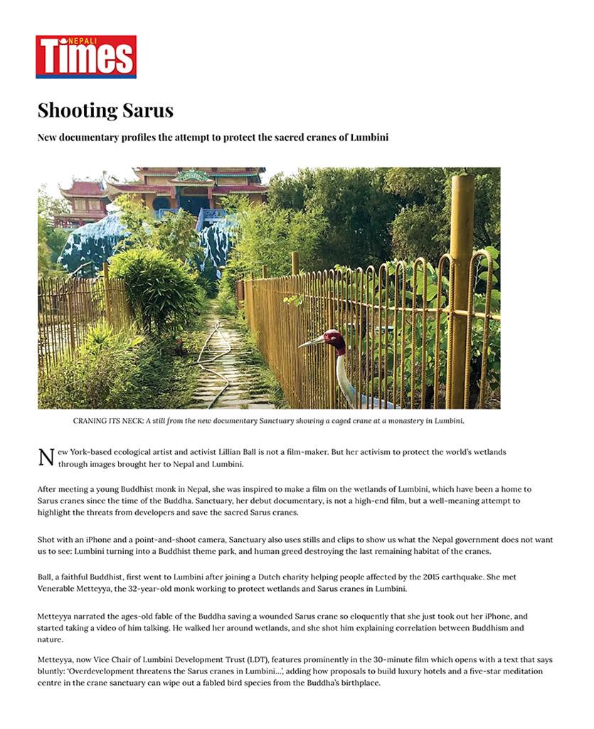 Nepali Times _ Shooting Sarus-1